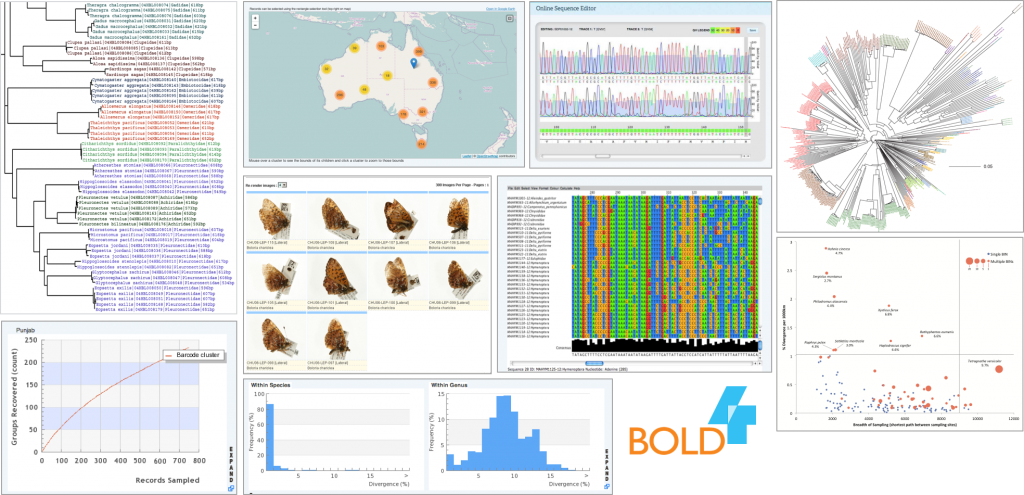 BOLD Systems - Analysis Tools